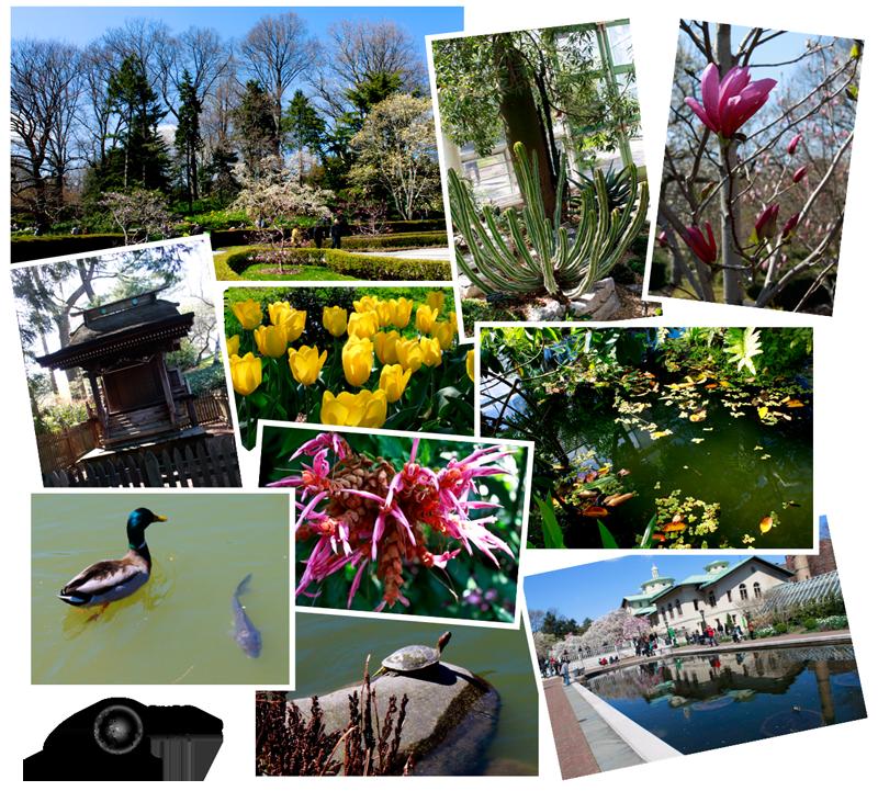 Expedição Vida - Brooklyn Botanic Garden 2