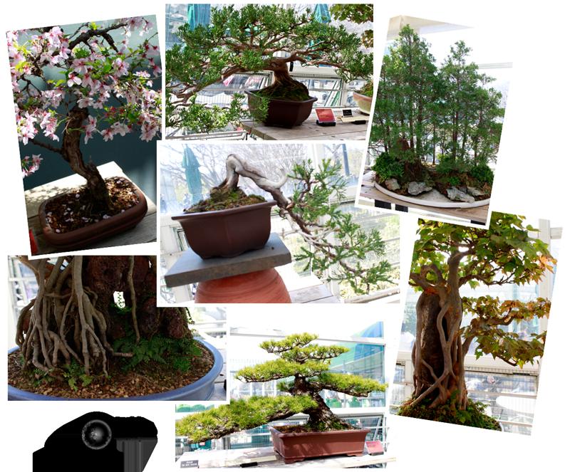 Expedição Vida - Brooklyn Botanic Garden 3