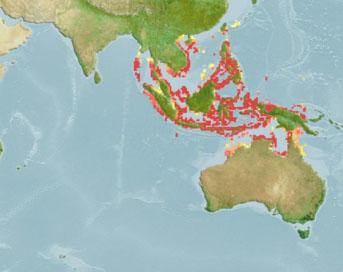 Oceanos Índico e Pacífico Ocidental