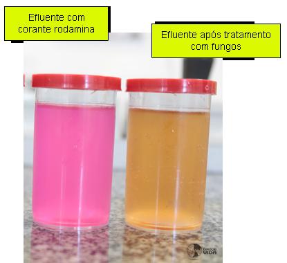 Expedição Vida - efluente com corante tratado com fungos