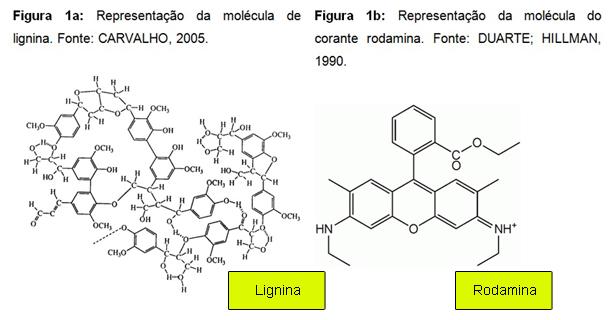Expedição Vida - moléculas de lignina e rodamina