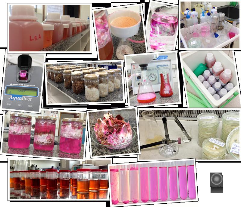 Expedição Vida - pesquisa com efluente colorido e fungois
