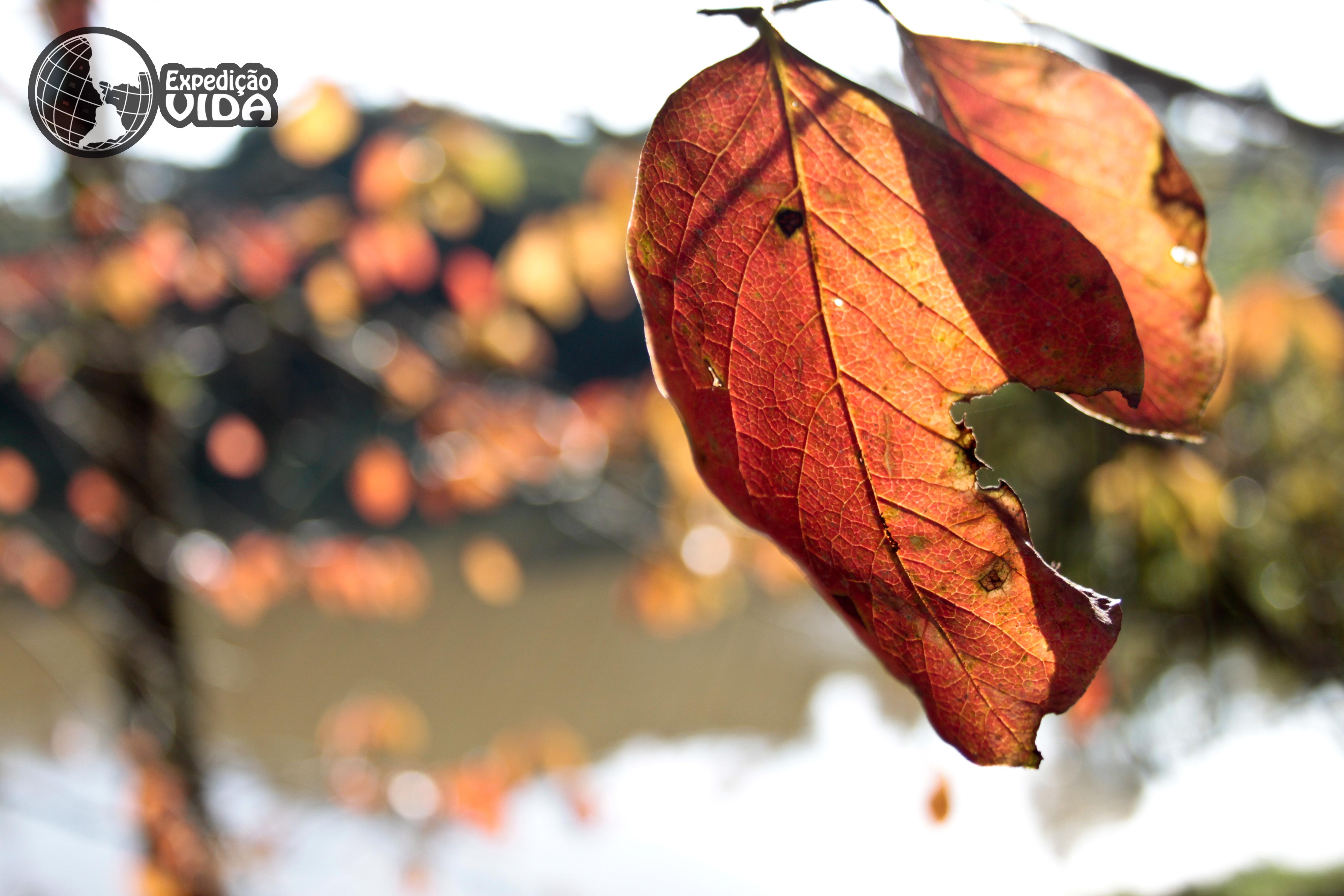 expedicao-vida-folhas-alaranjadas