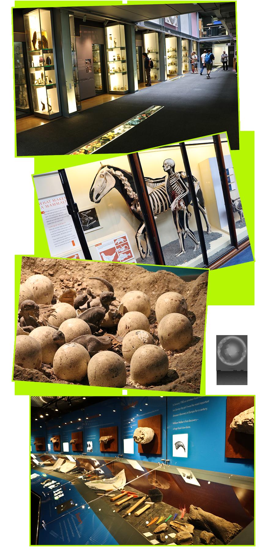 expedicao-vida-museu-historia-natural-londres-3