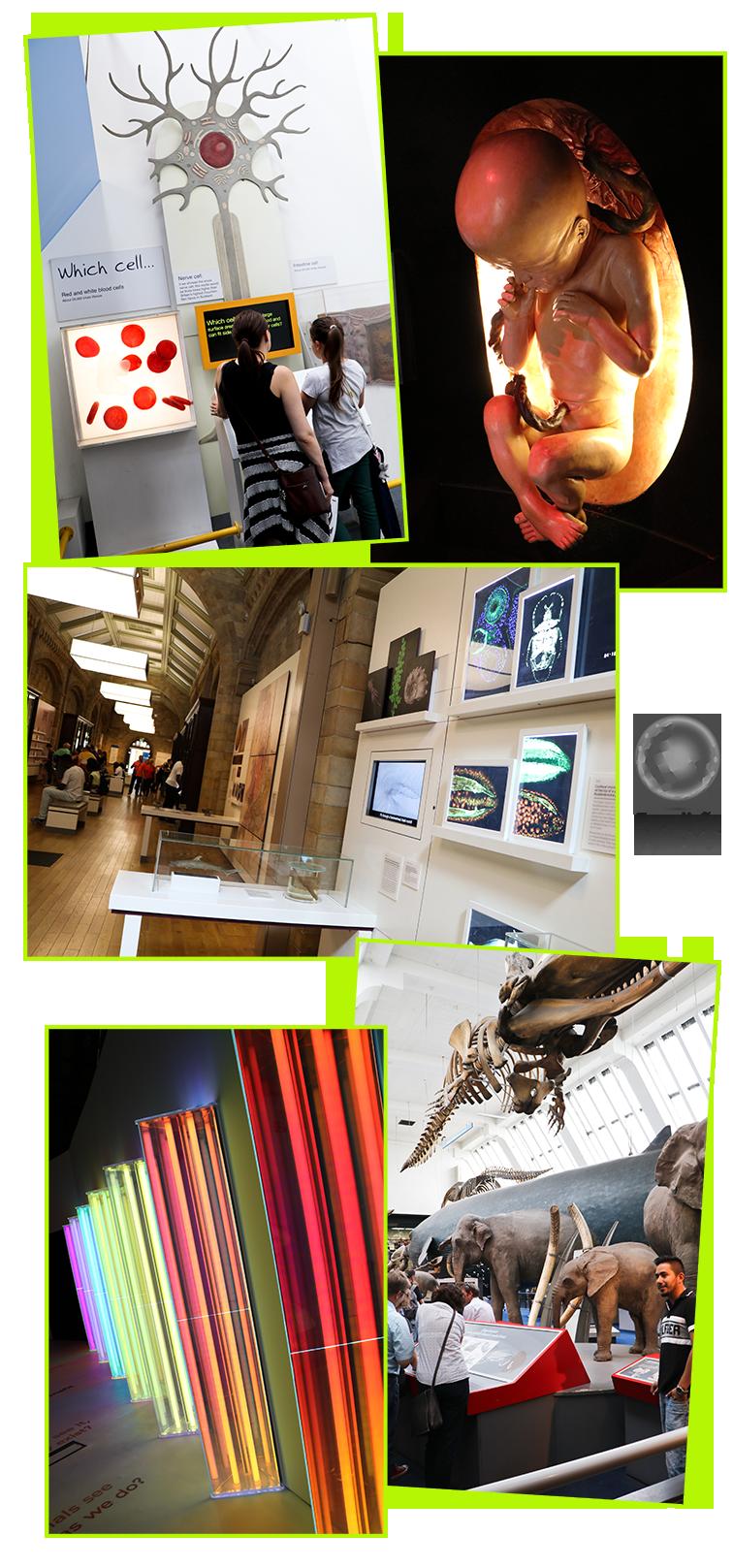 expedicao-vida-museu-historia-natural-londres-4